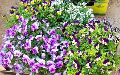 Llega la primavera al Huerto de la Alegría